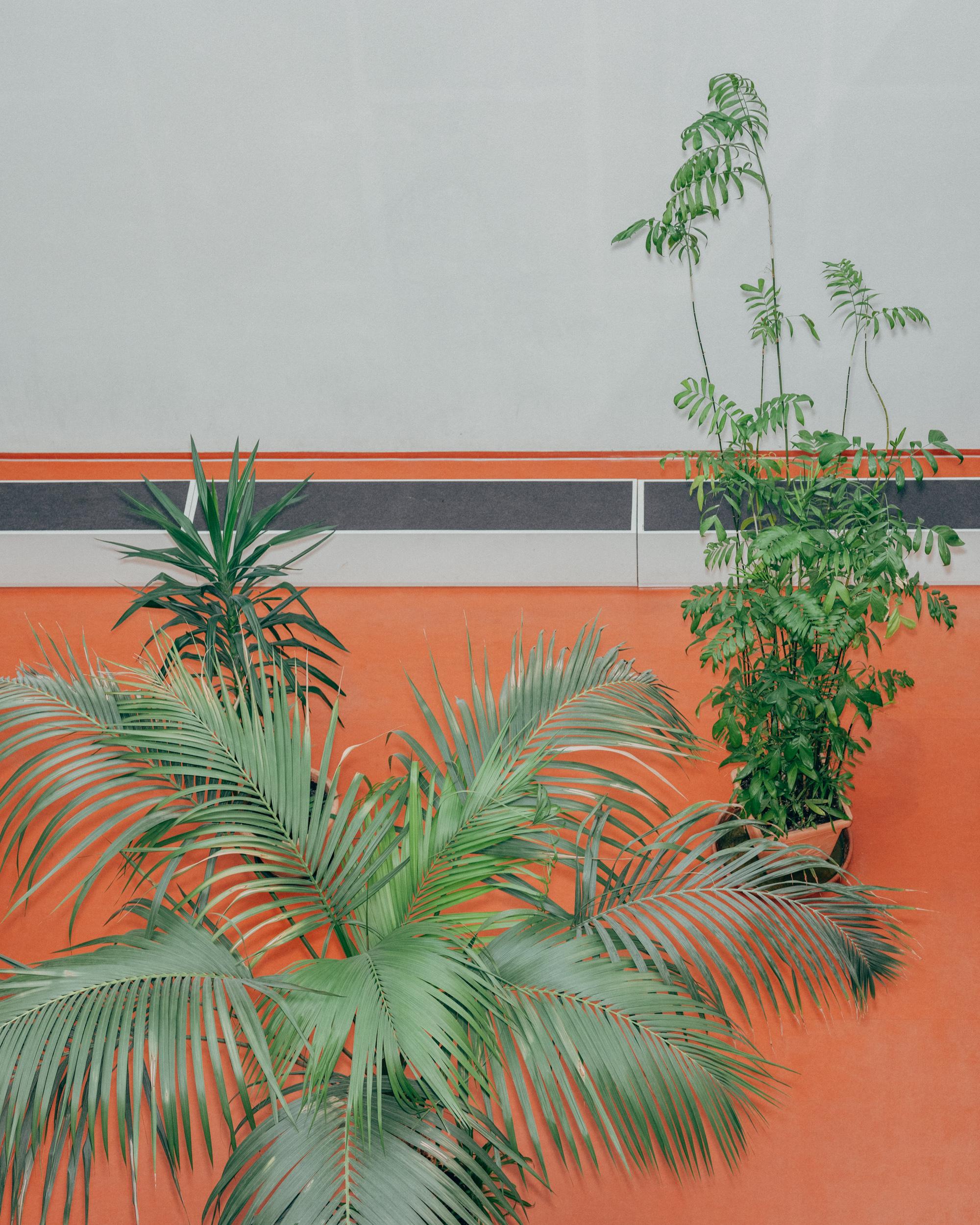 Die Panoramaschule wurde im Jahr 2011/2012 als zweite staatliche Schule mit dem Förderschwerpunkt geistige Entwicklung gebaut. Die Schule ist hell, freundlich und weitläufig. Pflanzen stehen im Atrium wo auch regelmässig Veranstaltungen wie zum Beispiel Konzerte, statt finden. Foto: Mario Wezel